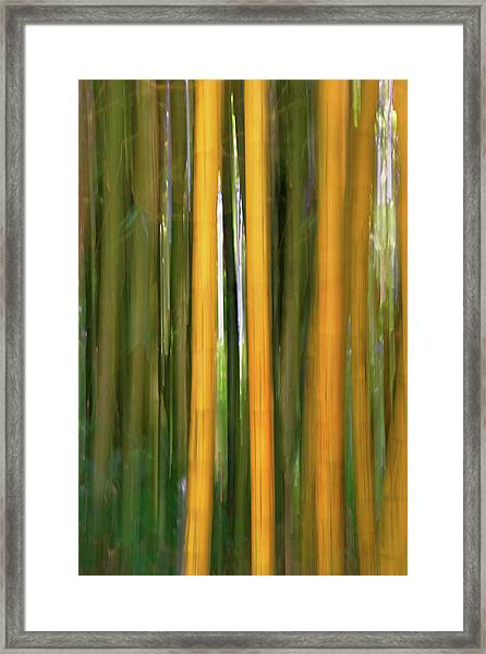 Bamboo Impressions Framed Print