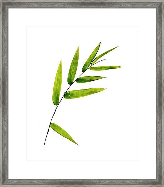 Bamboo Leaves Framed Print