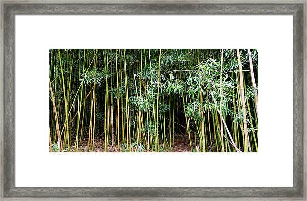 Bamboo Wind Chimes  Waimoku Falls Trail  Hana  Maui Hawaii Framed Print