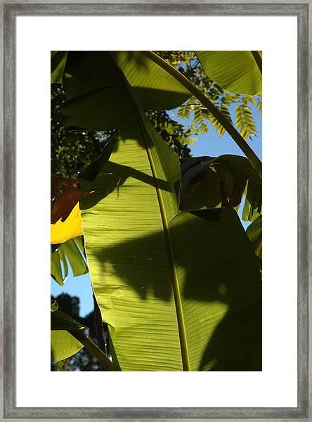 Banana Leaf Framed Print