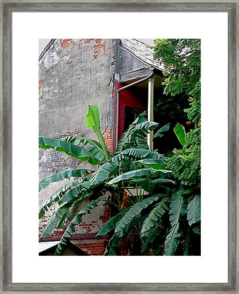 Bananas And Bricks Framed Print