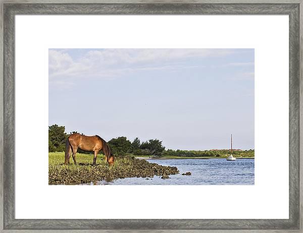 Banker Horse Along Taylors Creek Framed Print