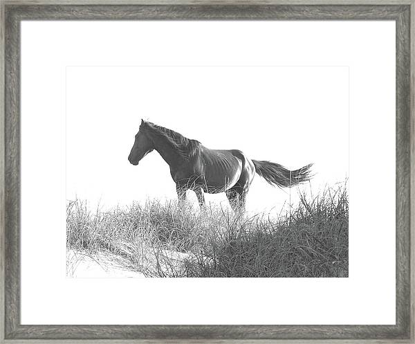 Banker Horse On Dune  1 Framed Print