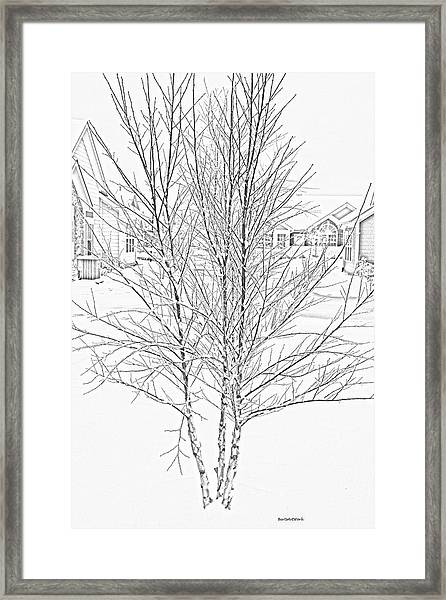 Bare Naked Tree Framed Print