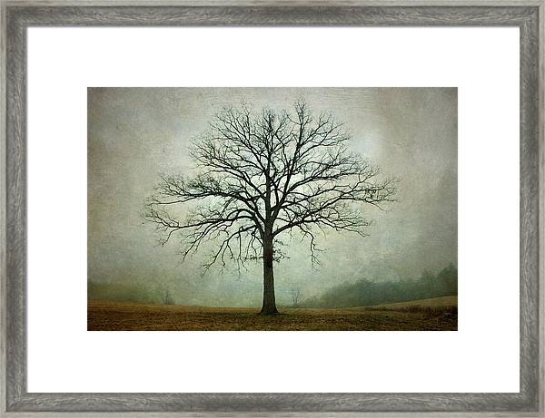 Bare Tree And Fog Framed Print