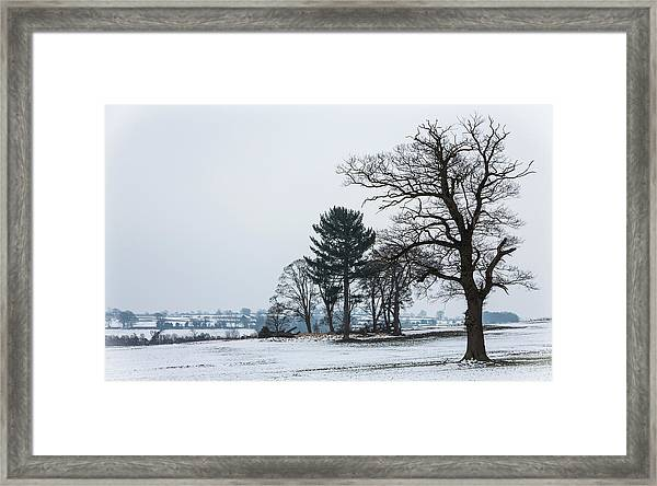 Bare Trees In The Snow Framed Print