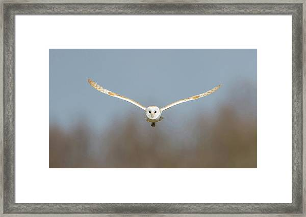 Barn Owl Sculthorpe Moor Framed Print