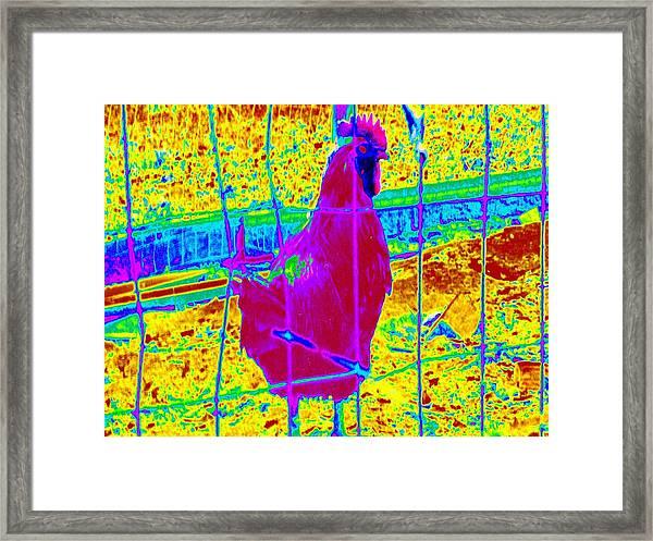 Barnyard Hero #4 Framed Print