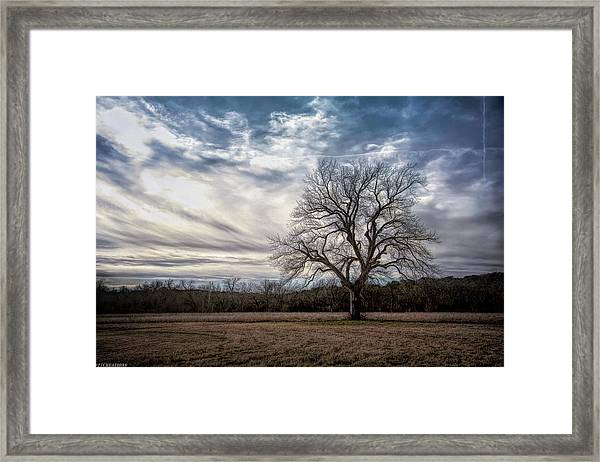Baron Tree Of Winter Framed Print