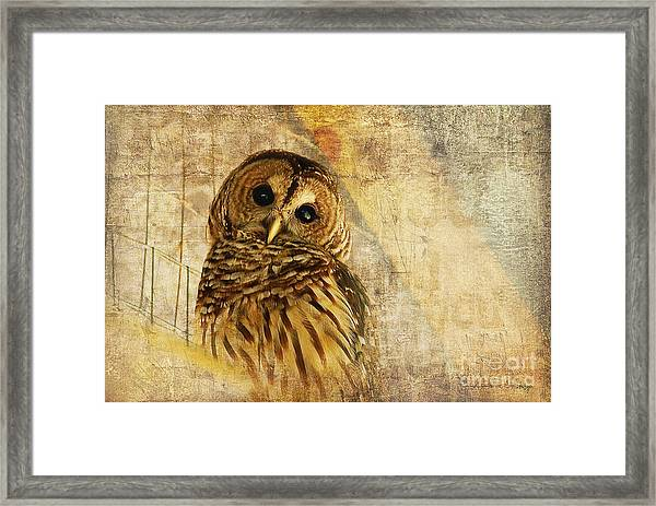 Framed Print featuring the photograph Barred Owl by Lois Bryan