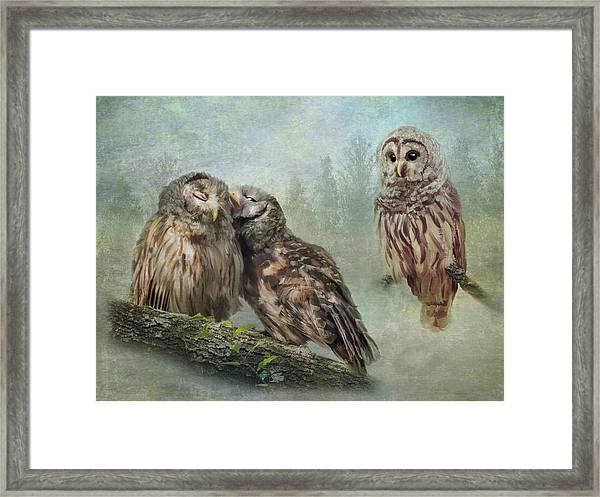 Framed Print featuring the photograph Barred Owls - Steal A Kiss by Patti Deters