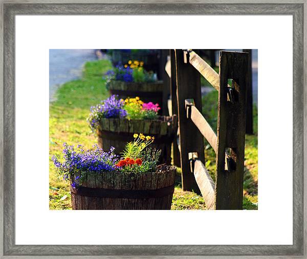 Barrel Of Spring Framed Print