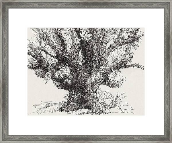 Barringtonia Tree Framed Print