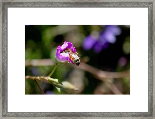 Bashful Bee  Framed Print