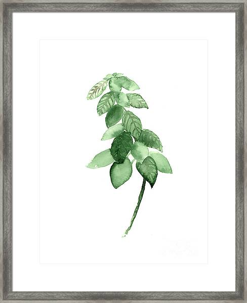 Basil Watercolor Art Print Painting Framed Print