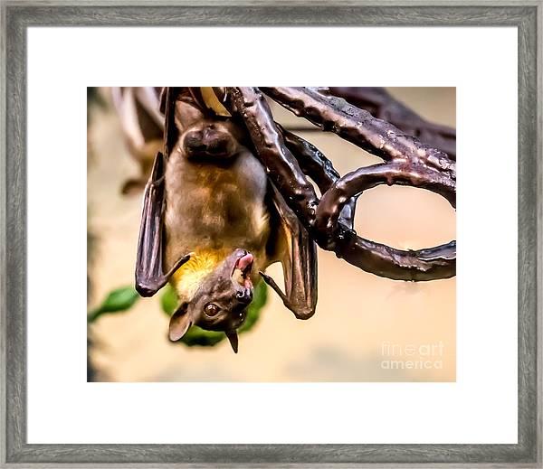 Bat Gobbling Apple Framed Print