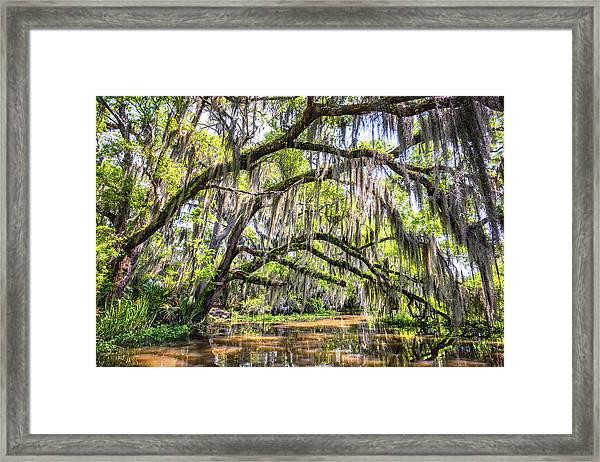 Bayou Cathedral Framed Print