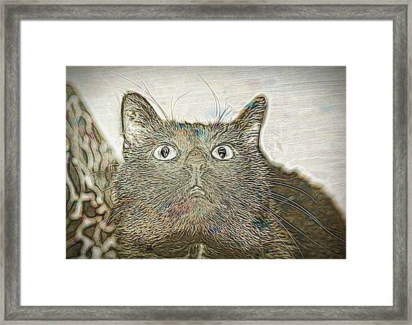 Bb Gazing Framed Print