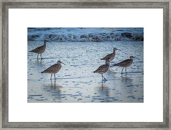 Beach Birds Framed Print