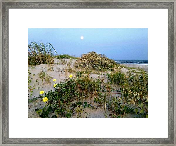 Beach Bouquet Framed Print