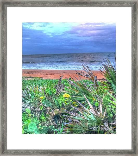 Beach Cactus Framed Print