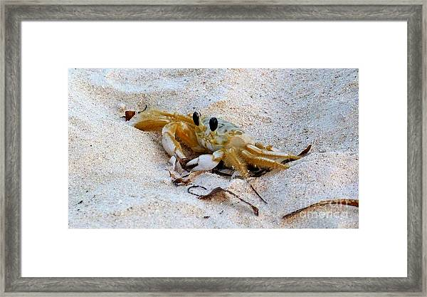 Beach Crab Framed Print