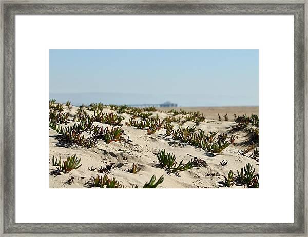 Beach Dune Framed Print