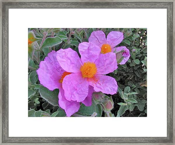 Beach Flower Framed Print