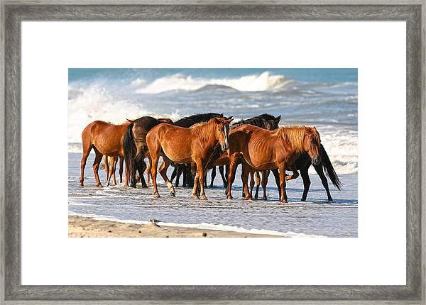 Beach Ponies Framed Print