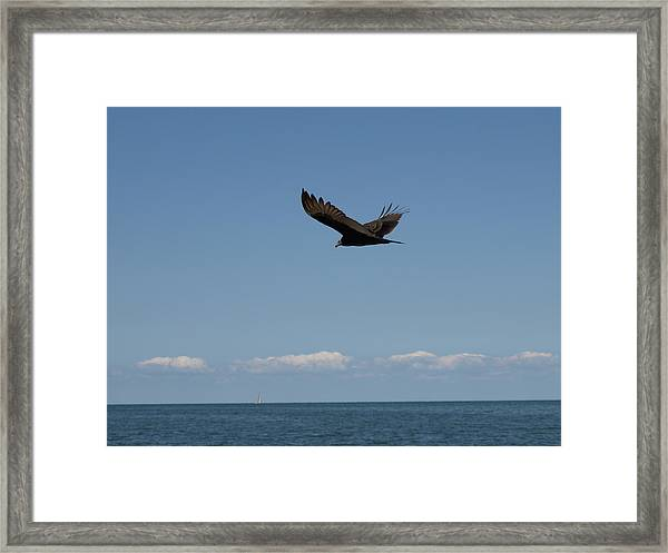Beach Vulture Framed Print