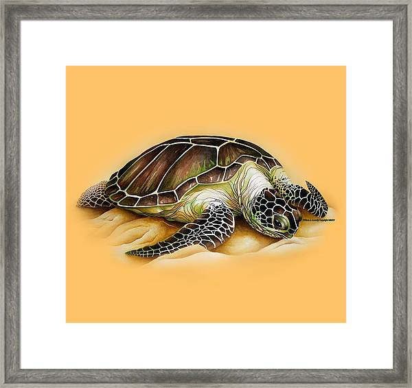 Beached For Promo Items Framed Print