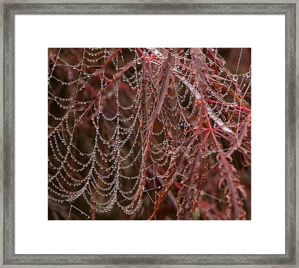Beads Of Raindrops Framed Print