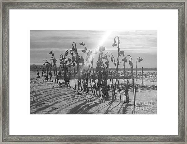 Beam Of Light Framed Print