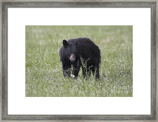 Bear Cub With Apple Framed Print
