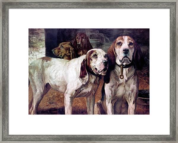 Bear Dogs - No Border Framed Print
