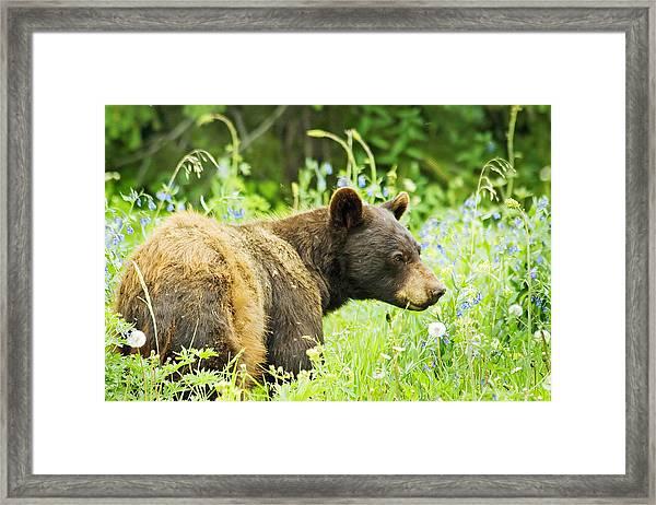 Bear In Flowers Framed Print