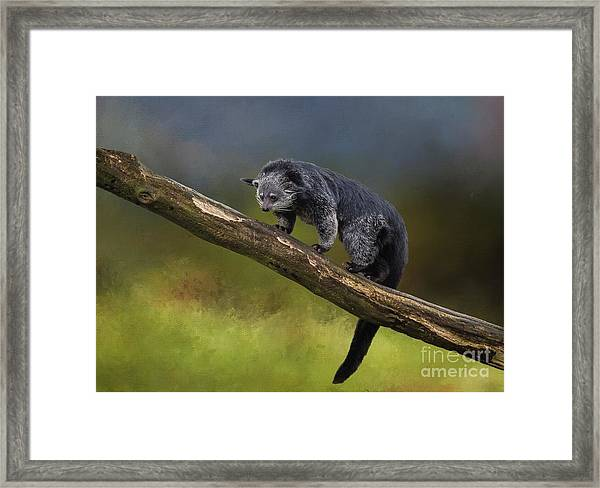 Bearcat Framed Print