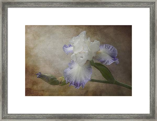 Framed Print featuring the photograph Bearded Iris 'gnuz Spread' by Patti Deters