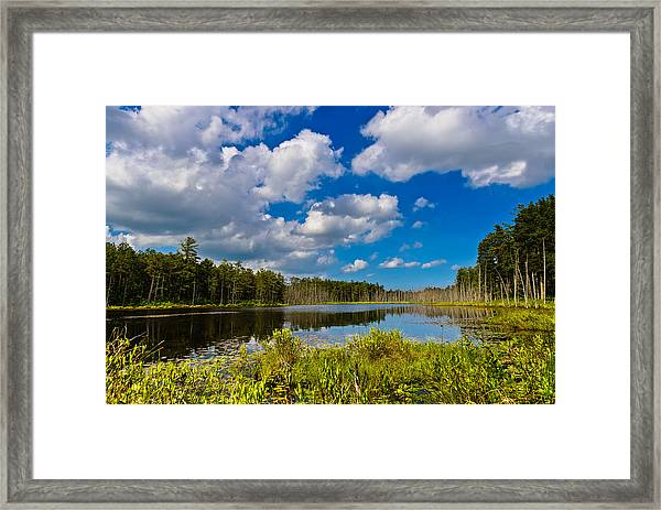 Beautiful Afternoon In The Pine Lands Framed Print