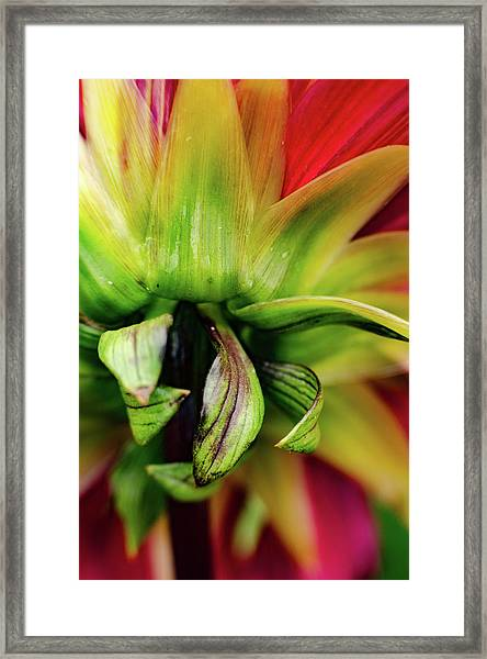 Beautiful Backside Framed Print