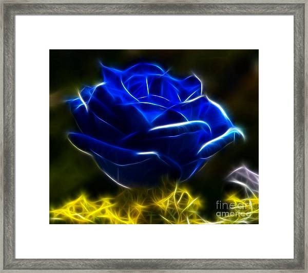 Beautiful Blue Rose Framed Print