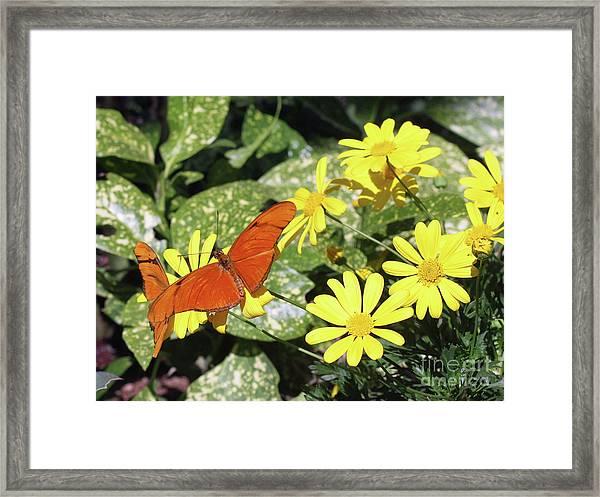 Beautiful Butterflies Framed Print
