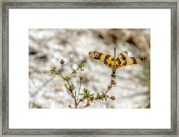 Beautiful Dragonfly Framed Print