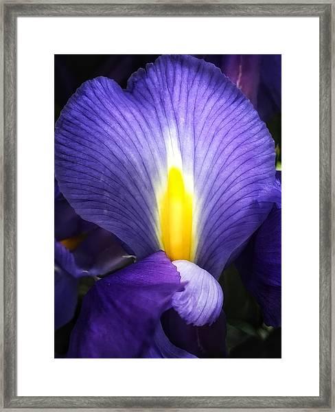 Beautiful Flame Framed Print