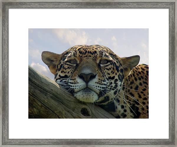 Beautiful Jaguar Framed Print