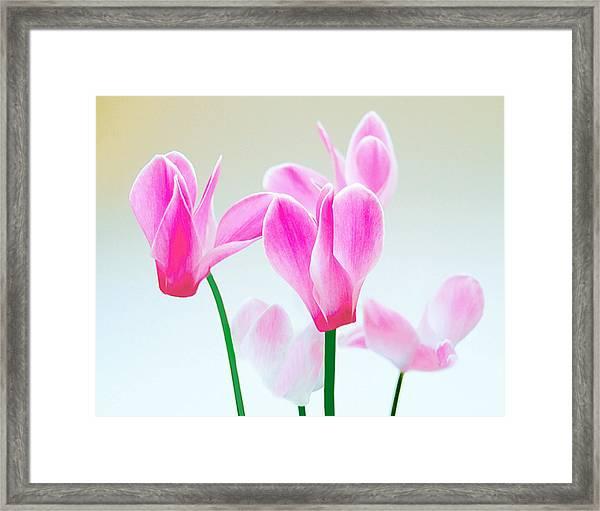 Beautiful Pink Framed Print