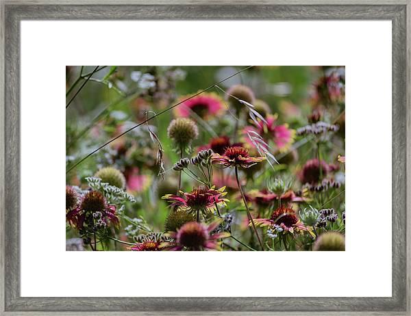 Beautiful Purple And Yellow Wildflowers Framed Print