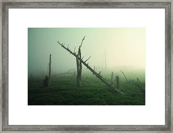 Beautiful Rot Framed Print by Koji Sugimoto