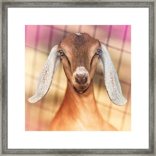 Beautiful Taffy Framed Print