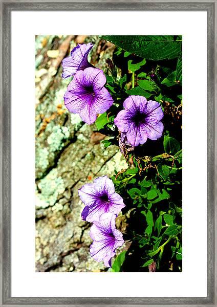 Beautiful Violets Framed Print